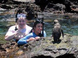 Scuba divers looking at penguin