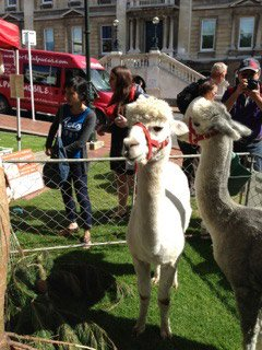Chinese international student Otago alpaca