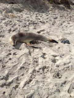 Otago international students seal animals new zealand
