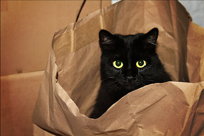black-cat-in-a-bag