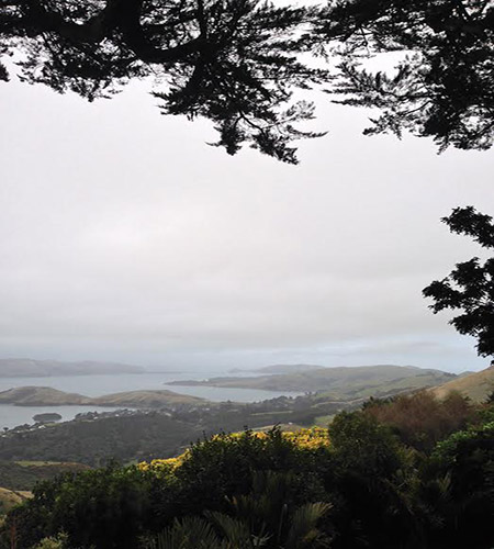 view-from-larnach-castle