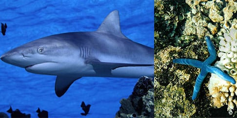 reef-shark-and-coral-reef