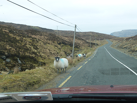 Sheep on side of road - Jessica Tomlinson - Maynooth University International Student