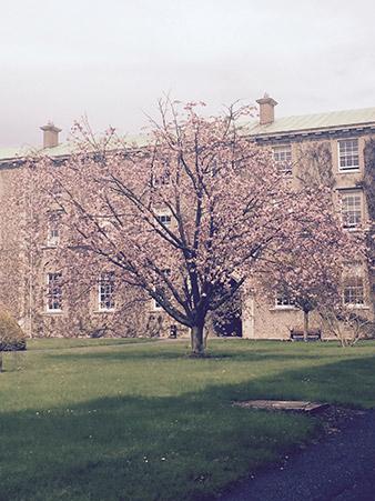 blossom-on-trees