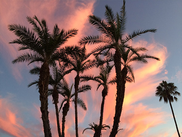 courtney-san-diego-palm-trees
