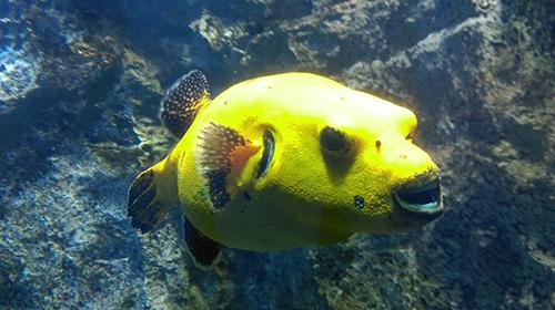 lemon-fish-in-Lyon-France-image4