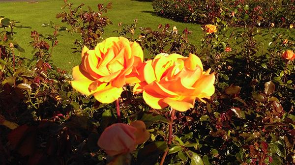 flower blognumber4 image2
