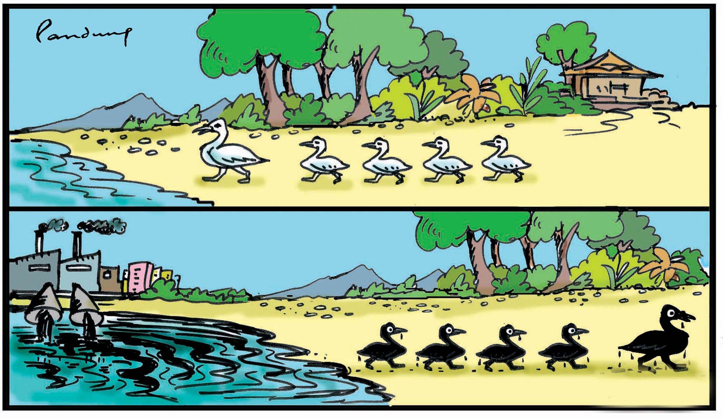 WED-cartoons BLACKDUCKS